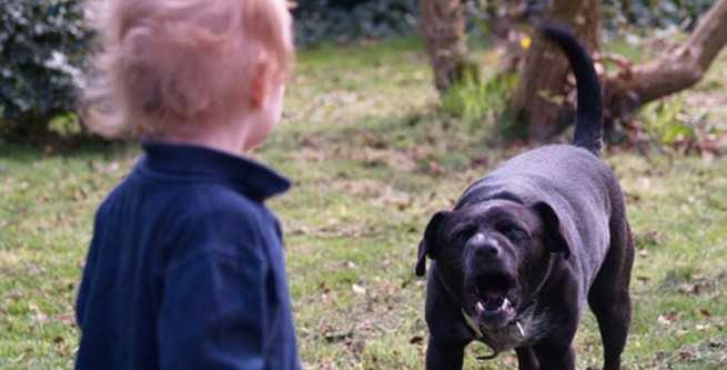 Собака пошматував 9-річного хлопчика