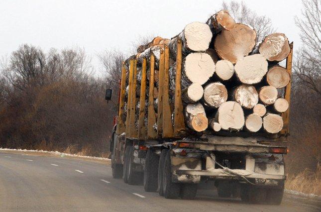 Дерево по «липових» документах перевозив житель Монастирищини