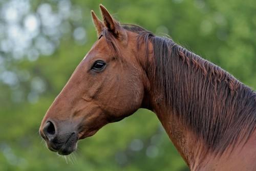 На Козівщині два хлопці вкрали коня і здали його на м'ясокомбінат