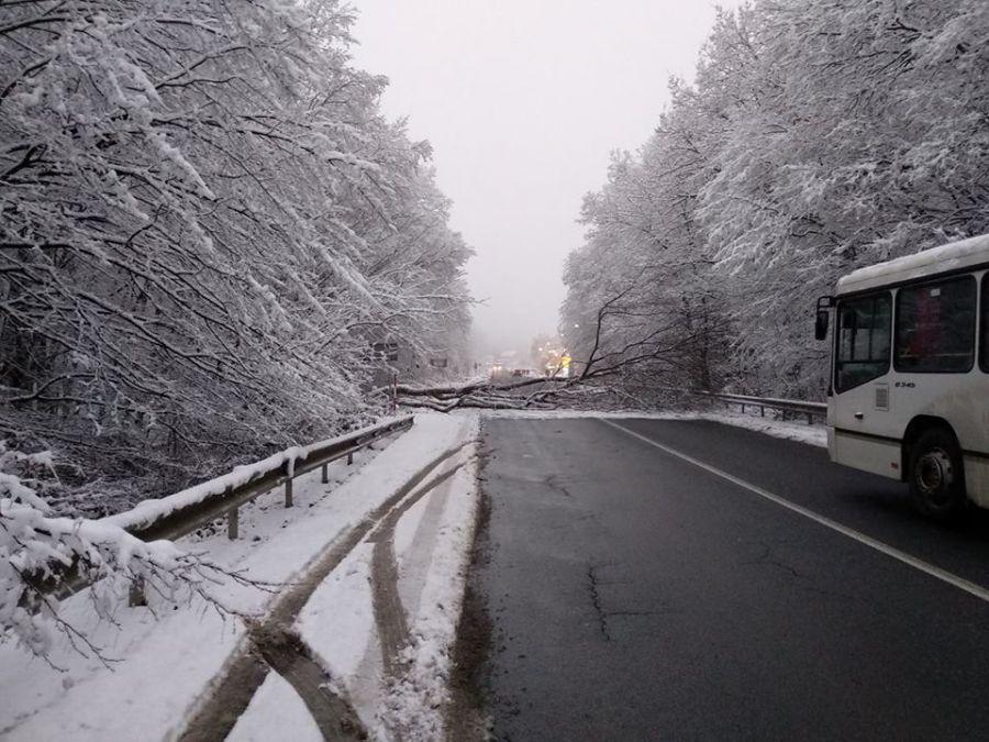 Дерево звалилося просто на проїжджу частину, залучалися рятувальники