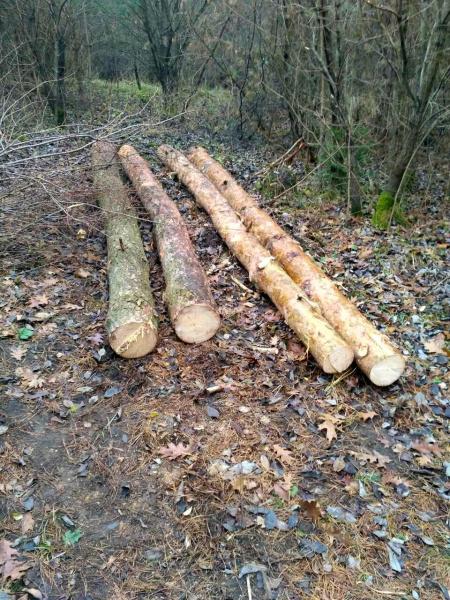 Зима близько: дерев майже на сто тисяч гривень нарубали на Зборівщині
