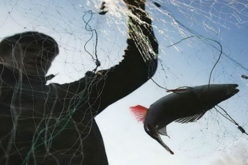 «Рибні браконьєри» активізувалися на Гусятинщині