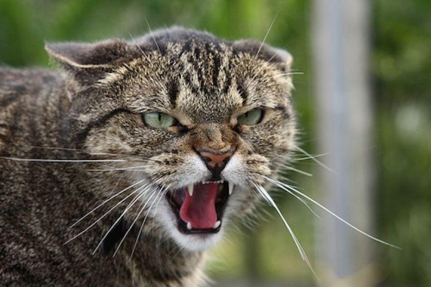 Через вбитого кота оголосили карантин