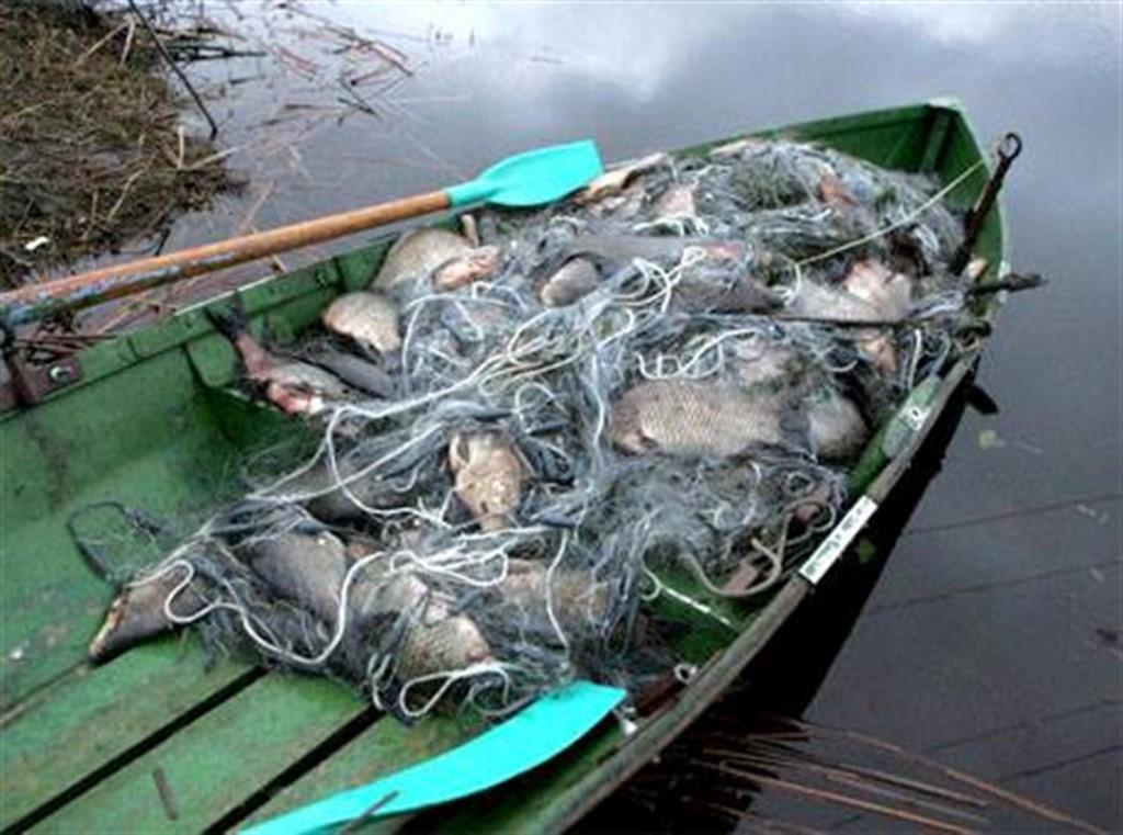 Зборівський браконьєр витягнув з річки понад 100 кілограмів риби і хотів уникнути покарання