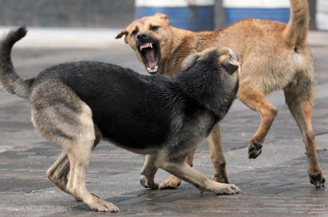 В одному із сіл перестріляли собак (Фото)