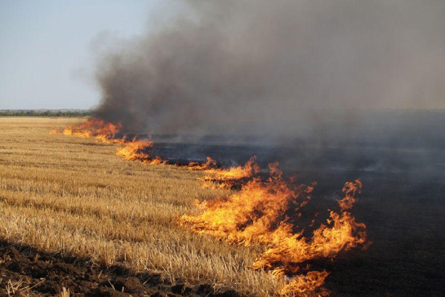 На Тернопільщині горіла суха трава: вогонь охопив декілька гектарів