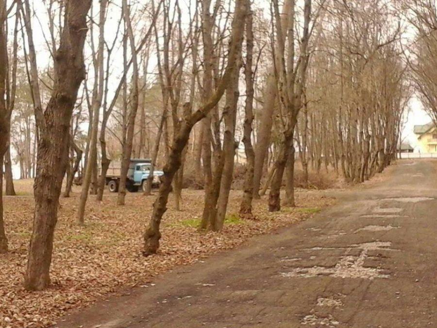 На Тернопільщині комунальники захаращують парк хмизом? (Фото)