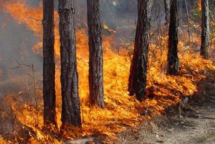 Хлопці на велосипедах погасили пожежу в лісі біля Бучачу (Відео)