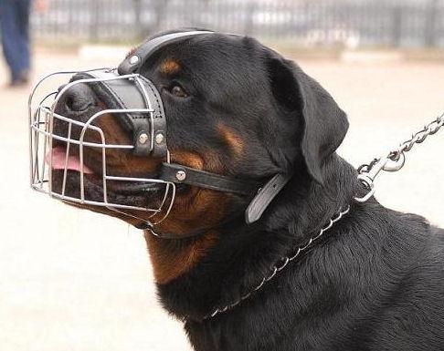 У місті на Тернопільщині влада зобов'язала місцевих мешканців тримати домашніх тварин на прив'язі