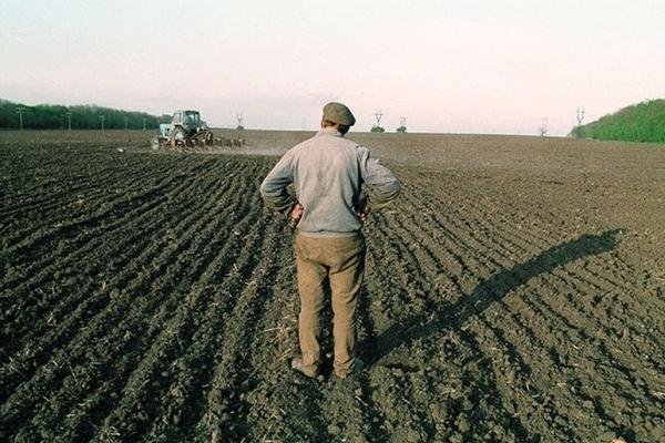 Що українці думають про запровадження ринку землі: соціологи оприлюднили цікаві дані