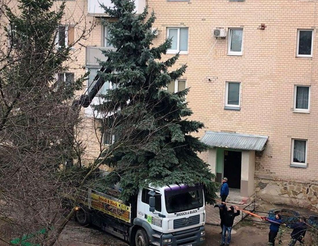 Заважала деяким мешканцям: головну ялинку Чорткова місту подарували жителі багатоповерхівки