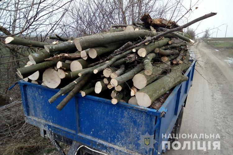 У Підгаєцькому районі в заповіднику вирубали 17 дерев