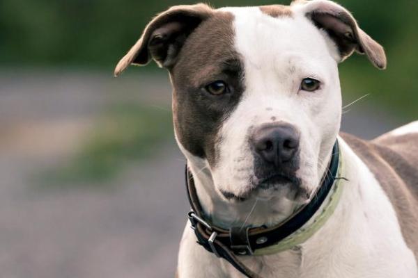 У кожному жарті є доля правди: Мін'юст таки почав продавати породистих собак за борги їхніх власників