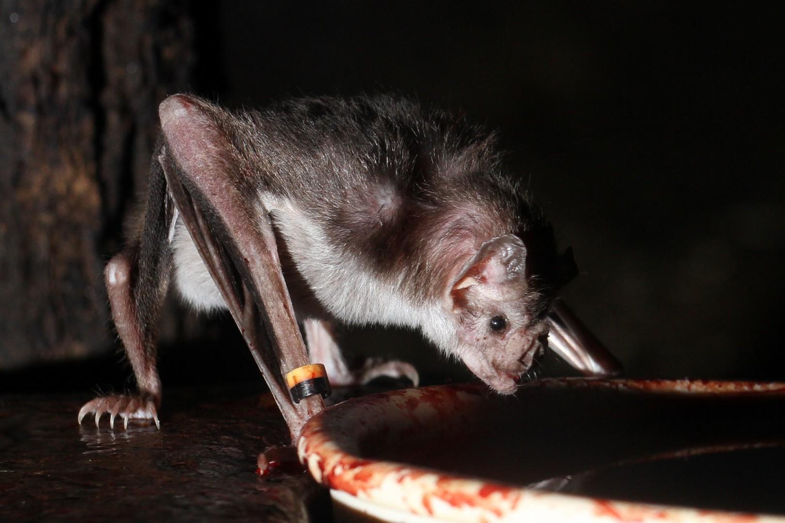 В Бучачі зі школи виселили «вампірів»